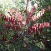 Fall colors along Campaign creek
