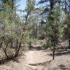 Pine Lakes trail