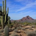 Saguaro on the Wild Horse (Lead) trail
