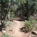 Drew trail