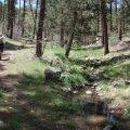 Hiker enjoying the Miller creek trail