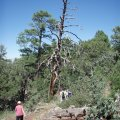 Hikers on the Timber mesa trail