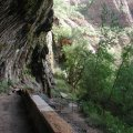 Weeping rock at Zion national park