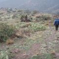 Hiking to Reavis Falls