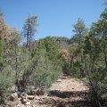 Gaddes spring trail