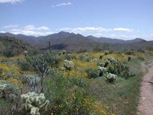 Elephant mountain loop trail (Spur Cross)