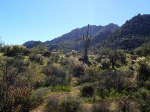 Rock Knob Loop - Scottsdale sonoran preserve