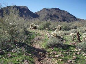 Trail to Garfias wash
