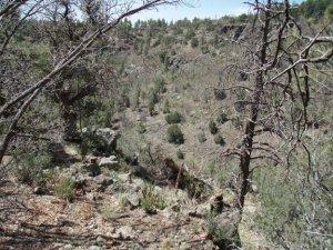 Gaddes canyon trail - upper
