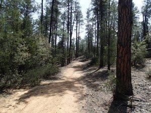 Houston loop trail