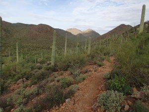 Lorriane Lee-Bowen loop hike trail