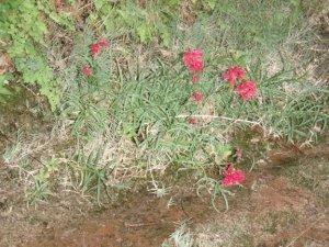 flowers in fern glen canyon