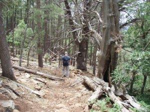 Hiking along the Donahue trail