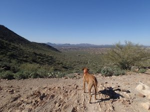 Dog enjoying the Lost Dog Wash trail